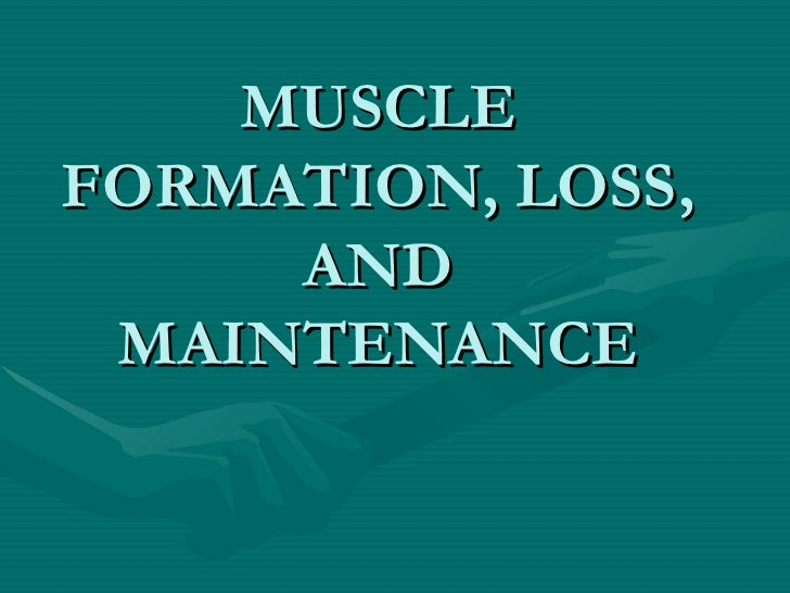 MUSCLE FORMATION, LOSS, AND MAINTENANCE