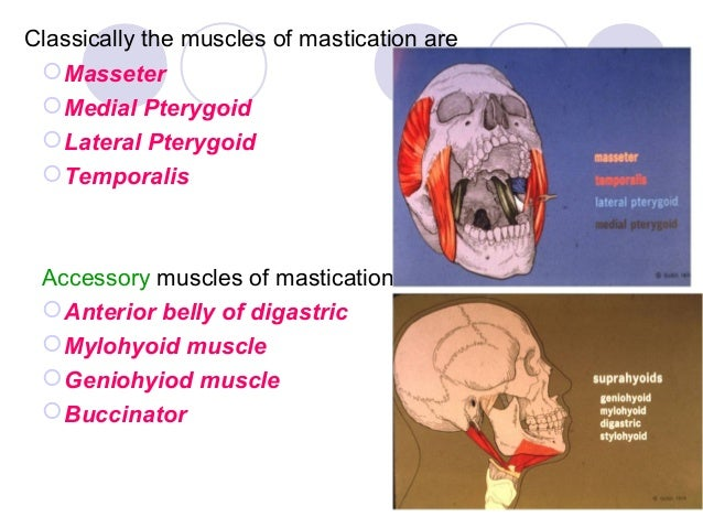 Muscle Of Mastication And Muscle Of Facial Expression