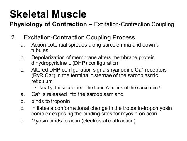 excitation contraction coupling process essay Receptor, excitation–contraction coupling, muscle fatigue, ryanodine receptor  ( complete cessation of ca2+ release may also be aided by a process in which.