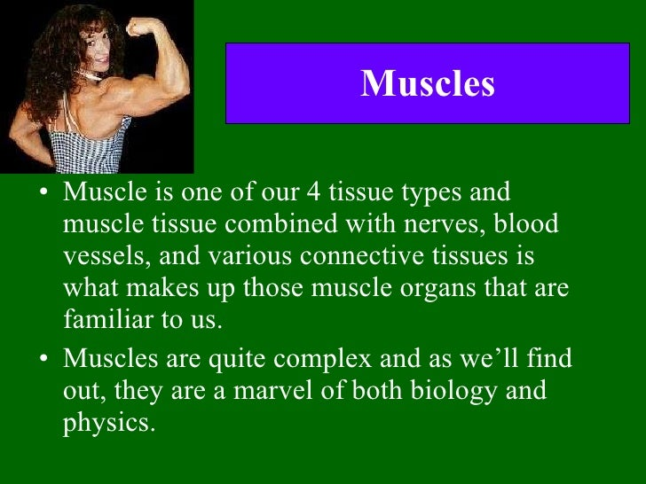 Muscles <ul><li>Muscle is one of our 4 tissue types and muscle tissue combined with nerves, blood vessels, and various con...