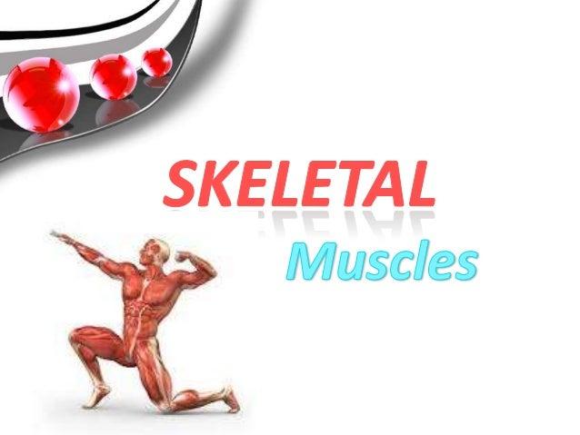 muscles-5-638?cb=1403962848, Cephalic Vein