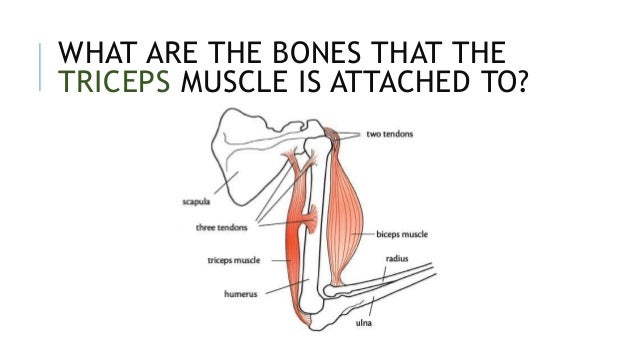 Muscle Imbalances What You Need To Know as well Index moreover 554notes3 moreover Denver additionally Mechanical S les. on contracting process diagram