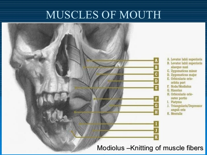Muscles Of Facial Expr...