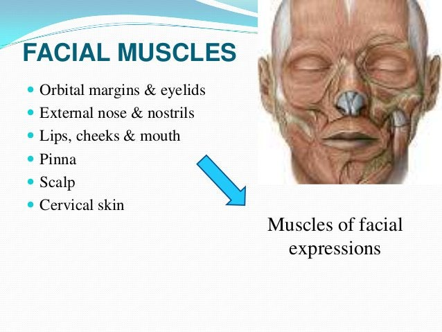 Specificity of facial muscles These muscles are different from other muscle  organization in having lack of deep membrano...