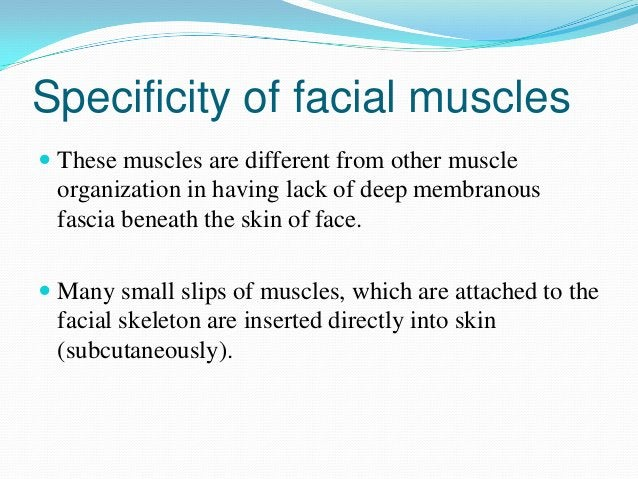 Importance of arrangement              Primary & secondary functionSPHINCTOR & DILATOR OF   FACIAL  ORIFICES      V/S     ...