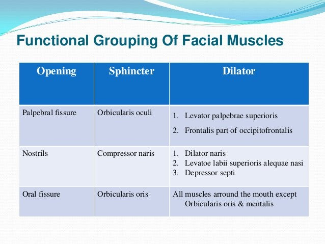 Facial Nerve Paralysis Supranuclear – upper motor  neuron type of paralysis Nuclear – all signs of Bell's palsy         ...