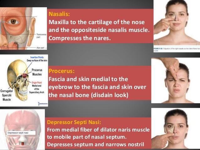 nasal group 8 9