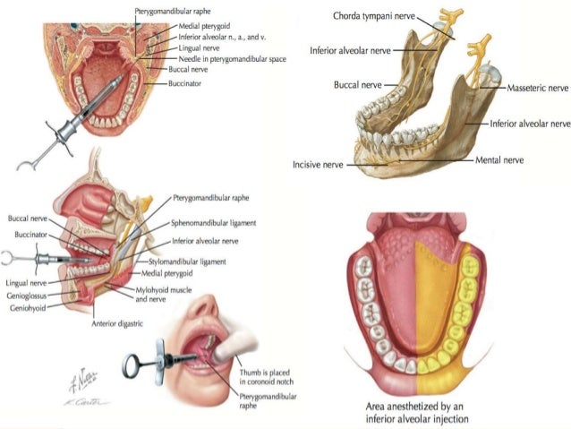 Muscles Of Mastication And Its Physiology