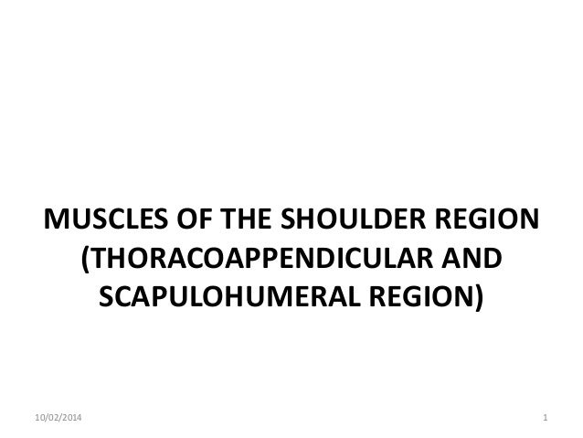 MUSCLES OF THE SHOULDER REGION (THORACOAPPENDICULAR AND SCAPULOHUMERAL REGION)  10/02/2014  1