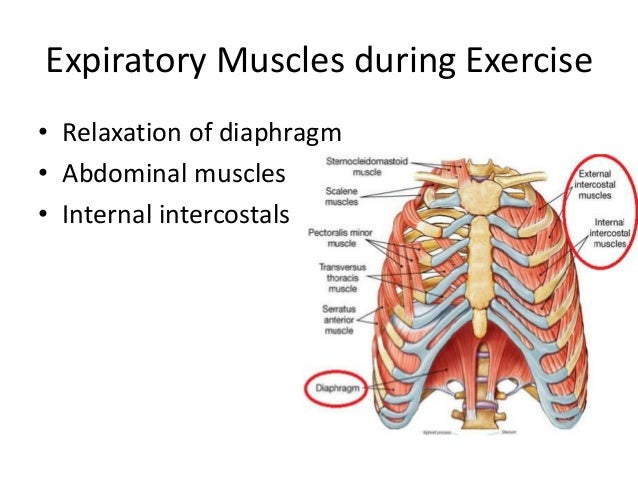 physio ex exercise the muscular system skeletal muscle The integumentary system physioex lab manual exercise 1 cell  the integumentary system physioex lab manual  lab exercise 1) 3 skeletal and muscular.