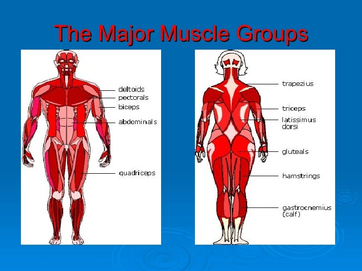 muscles ppt aw, Human Body