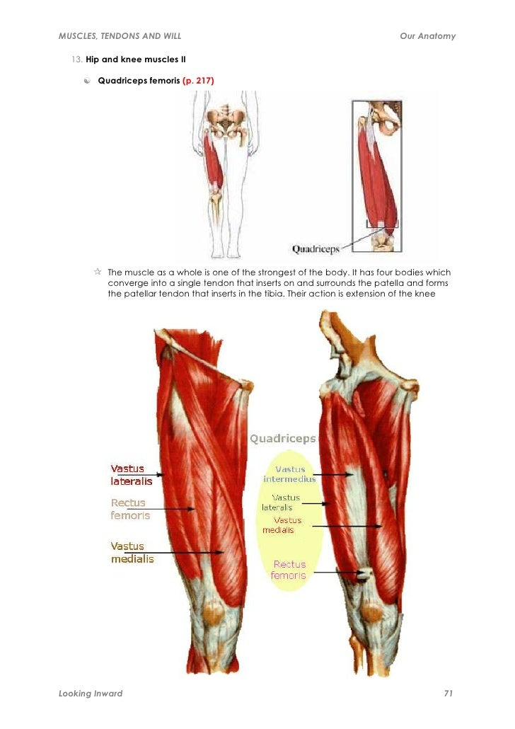 Muscles, tendons and will