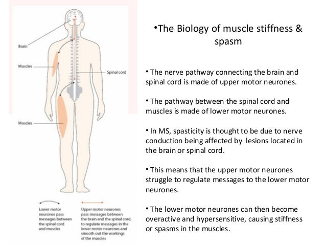 Muscle stiffness and spasm