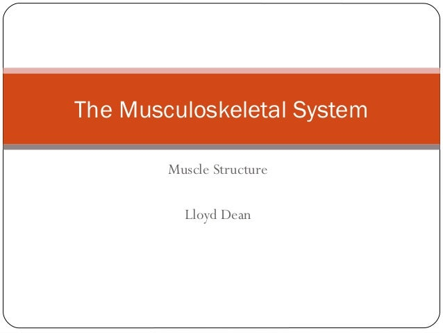 The Musculoskeletal System Muscle Structure Lloyd Dean