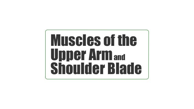 Muscles of the Upper Armand Shoulder Blade