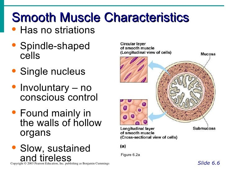 unique structural features of cardiac muscle Another feature that is unique to cardiac muscle tissue is autorhythmicity cardiac muscle tissue is able to set its own contraction rhythm due to the presence of pacemaker cells that stimulate the other cardiac muscle cells.