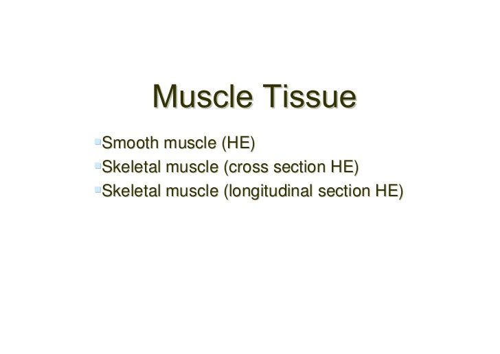 Smooth muscle (HE)Skeletal muscle (cross section HE)Skeletal muscle (longitudinal section HE)