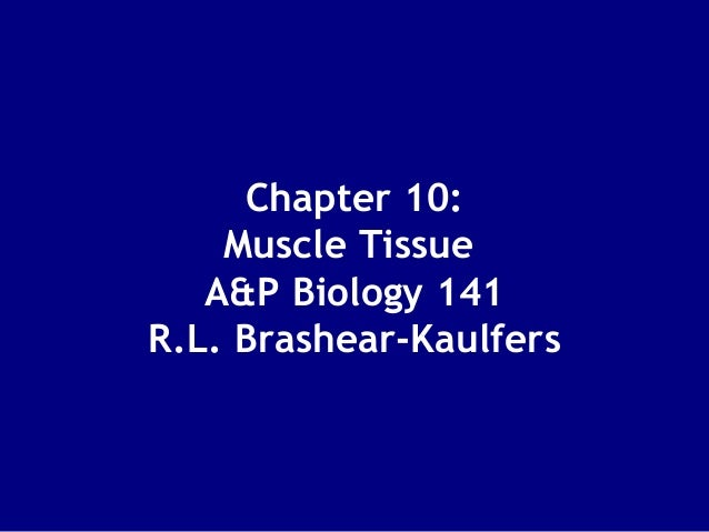 Chapter 10: Muscle Tissue A&P Biology 141 R.L. Brashear-Kaulfers