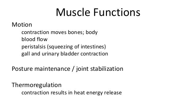 function of muscle tissue Functions of bones  adipose, and fibrous connective tissue) bones have many functions, including the following:  a framework for the attachment of muscles and .