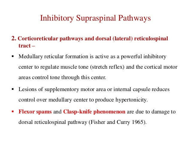 Inhibitory Supraspinal Pathways 2. Corticoreticular pathways and dorsal (lateral) reticulospinal tract –  Medullary retic...