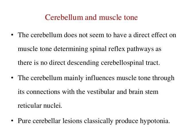 Cerebellum and muscle tone • The cerebellum does not seem to have a direct effect on  muscle tone determining spinal refle...