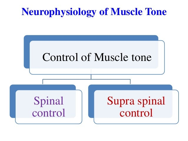 Neurophysiology of Muscle Tone  Control of Muscle tone  Spinal control  Supra spinal control