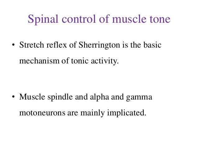 Spinal control of muscle tone • Stretch reflex of Sherrington is the basic mechanism of tonic activity.  • Muscle spindle ...