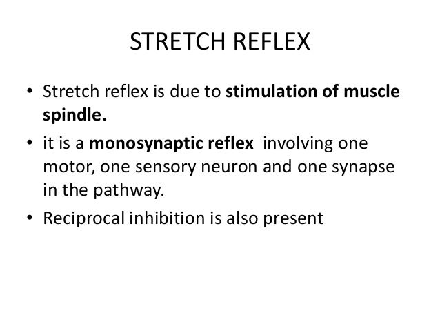 STRETCH REFLEX • Stretch reflex is due to stimulation of muscle spindle. • it is a monosynaptic reflex involving one motor...