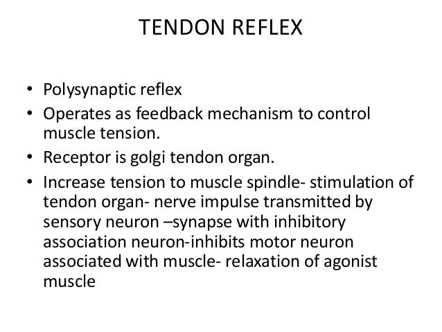 TENDON REFLEX • Polysynaptic reflex • Operates as feedback mechanism to control muscle tension. • Receptor is golgi tendon...
