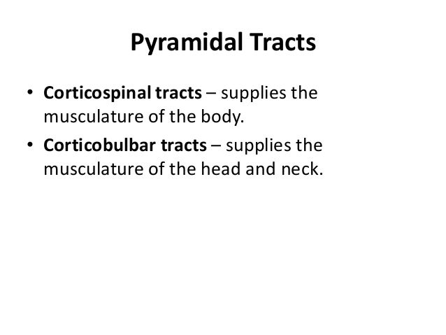 Corticospinal tract Corticobulbar tract