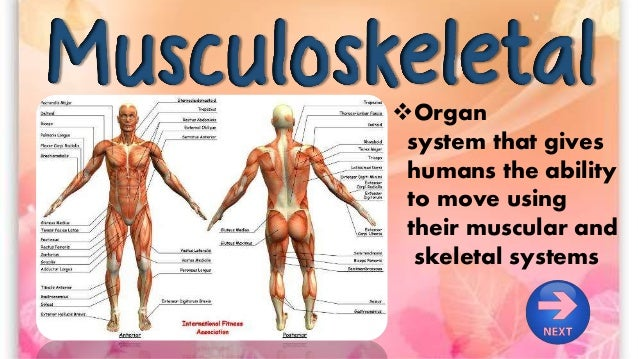 the human musculoskeletal system, Human Body