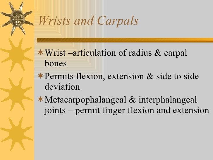 Wrists and Carpals <ul><li>Wrist –articulation of radius & carpal bones </li></ul><ul><li>Permits flexion, extension & sid...
