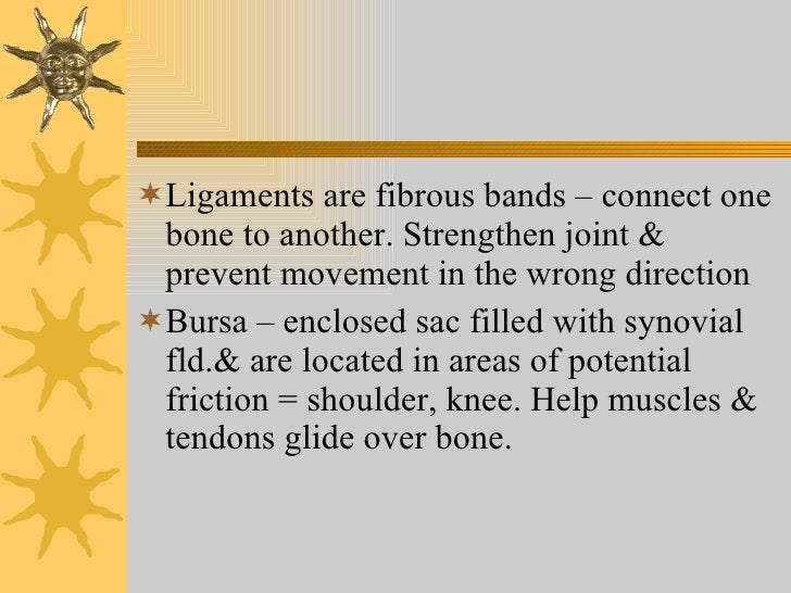 <ul><li>Ligaments are fibrous bands – connect one bone to another. Strengthen joint & prevent movement in the wrong direct...