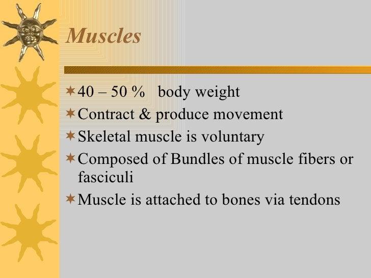 Muscles <ul><li>40 – 50 %  body weight </li></ul><ul><li>Contract & produce movement </li></ul><ul><li>Skeletal muscle is ...