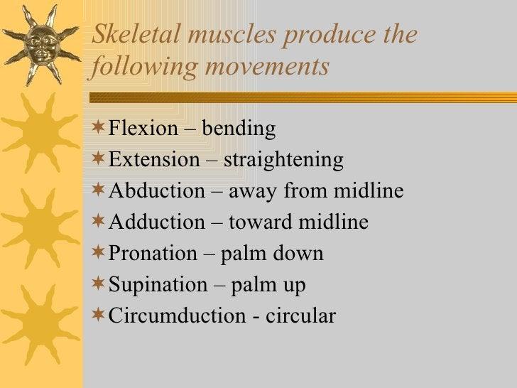 Skeletal muscles produce the following movements <ul><li>Flexion – bending </li></ul><ul><li>Extension – straightening </l...