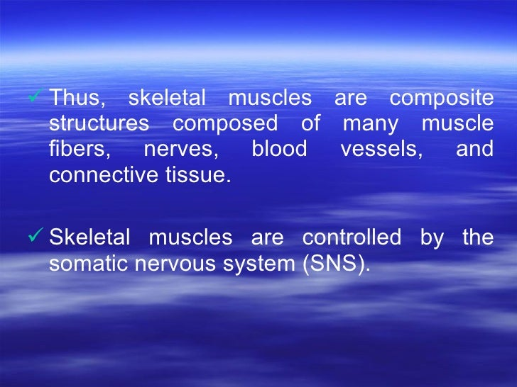 <ul><li>Thus, skeletal muscles are composite structures composed of many muscle fibers, nerves, blood vessels, and connect...