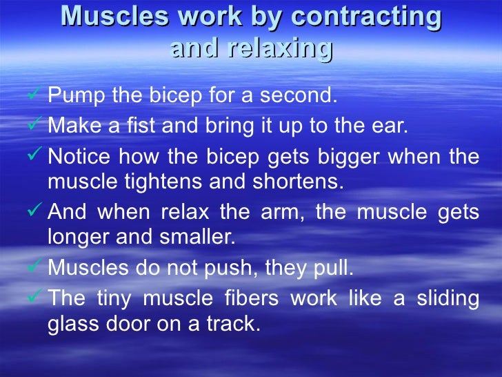 Muscles work by contracting and relaxing <ul><li>Pump the bicep for a second.  </li></ul><ul><li>Make a fist and bring it ...