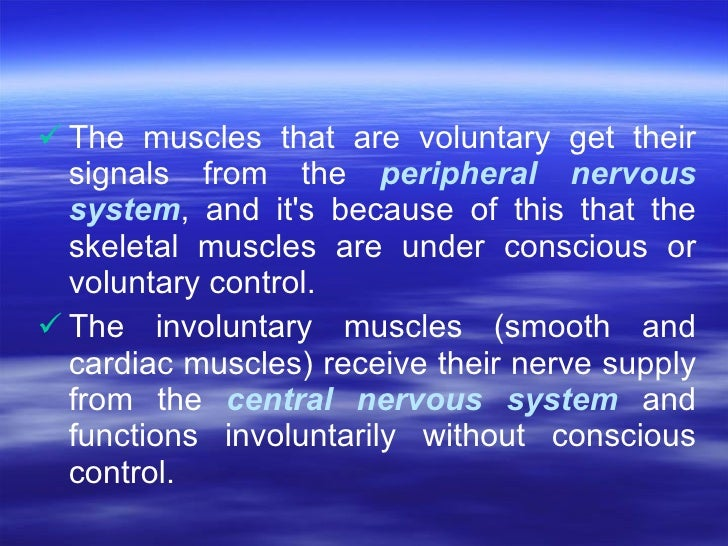 <ul><li>The muscles that are voluntary get their signals from the  peripheral nervous system , and it's because of this th...