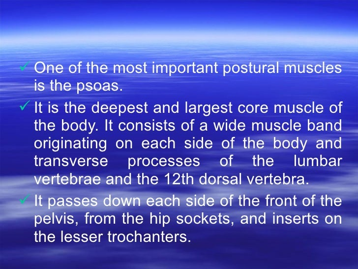 <ul><li>One of the most important postural muscles is the psoas.  </li></ul><ul><li>It is the deepest and largest core mus...