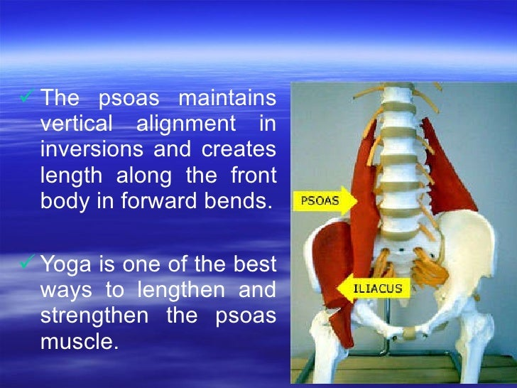 <ul><li>The psoas maintains vertical alignment in inversions and creates length along the front body in forward bends. </l...