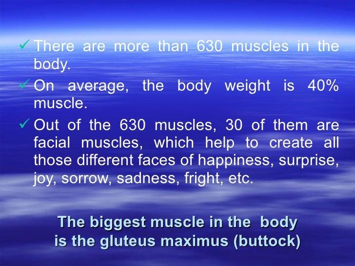 <ul><li>There are more than 630 muscles in the body.  </li></ul><ul><li>On average, the body weight is 40% muscle.  </li><...