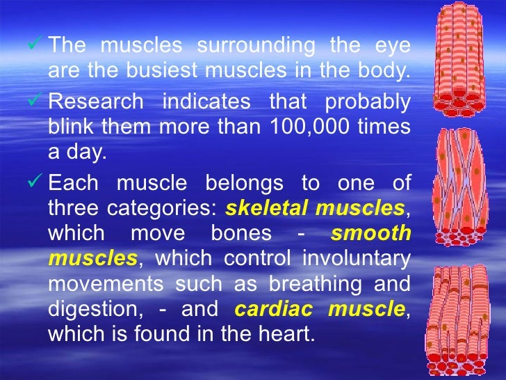 <ul><li>The muscles surrounding the eye are the busiest muscles in the body.  </li></ul><ul><li>Research indicates that pr...