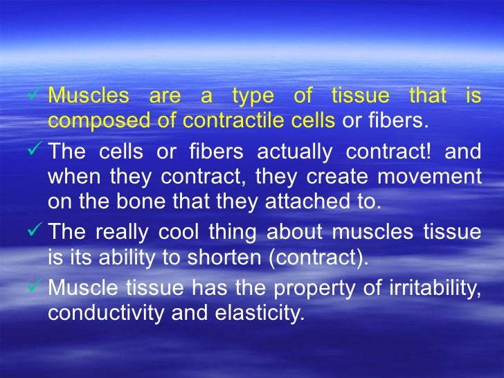 <ul><li>Muscles are a type of tissue that is composed of contractile cells  or fibers.  </li></ul><ul><li>The cells or fib...