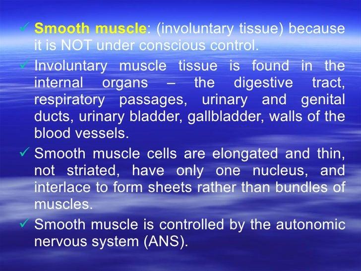 <ul><li>Smooth muscle : (involuntary tissue) because it is NOT under conscious control.  </li></ul><ul><li>Involuntary mus...