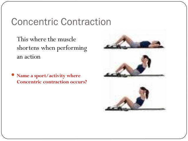 Muscular contraction and muscle types