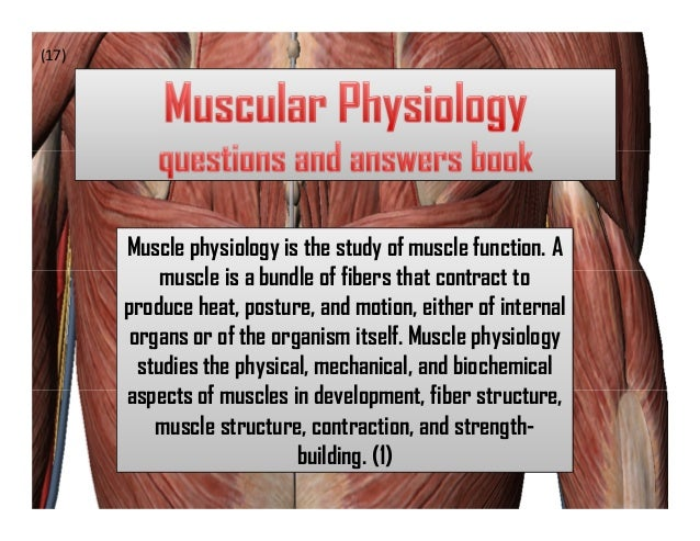 (17)       Muscle physiology is the study of muscle function. A            muscle is a bundle of fibers that contract to  ...