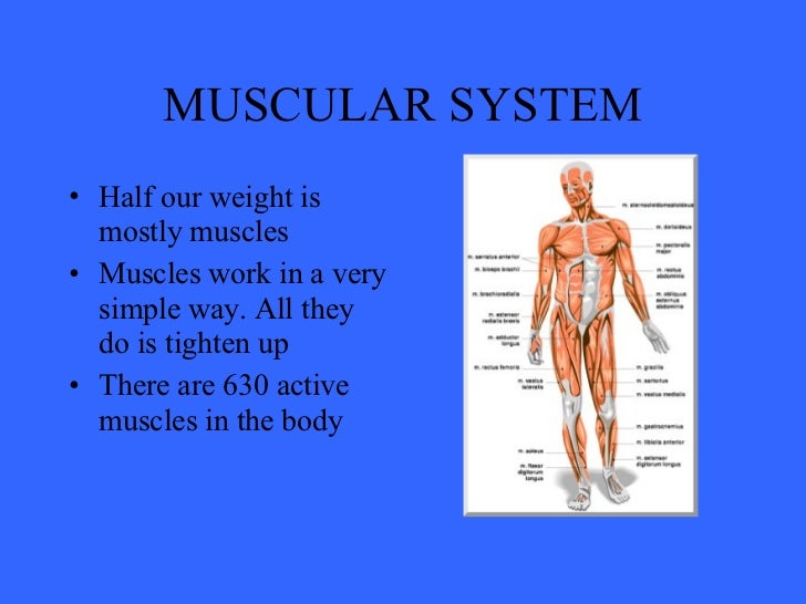 download muscle skeletal diagram | ohnonotstereo, Muscles