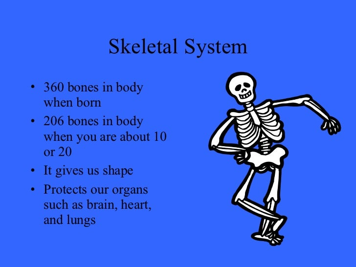 skeletal and muscular systems Structure and function of the musculoskeletal system  Î muscular system is 50% of total human body weight Î 600 skeletal muscles,.