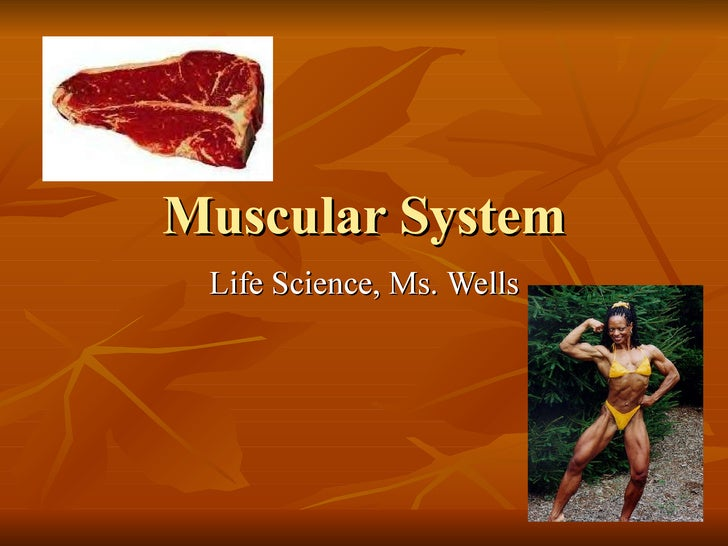 Muscular System Life Science, Ms. Wells