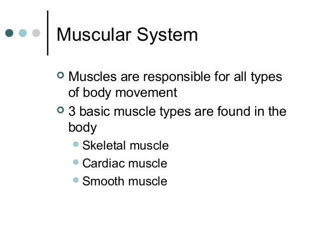 Muscular System Muscles are responsible for all types of body movement  3 basic muscle types are found in the body    S...